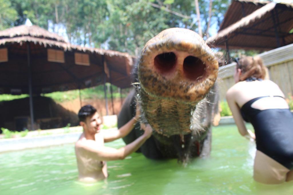 Kok Chang Safari - Elephant caring, bathing